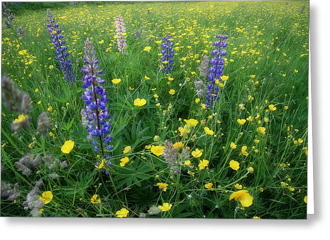 Wild Field Greeting Card by Andrea Galiffi