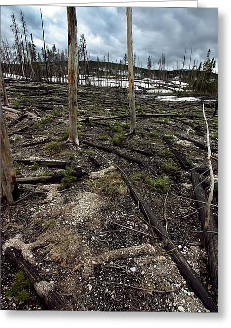 Greeting Card featuring the photograph Wild Fire Aftermath by Amanda Stadther