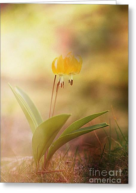 Wild Flower Dream I I Greeting Card by Sharon Elliott