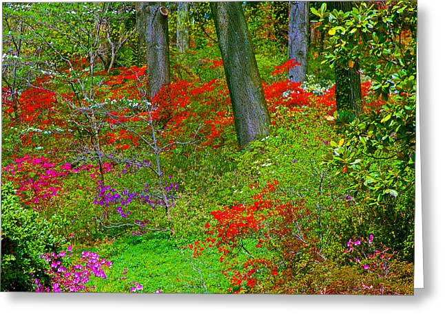 Wild Flower Garden Greeting Card by Andy Lawless