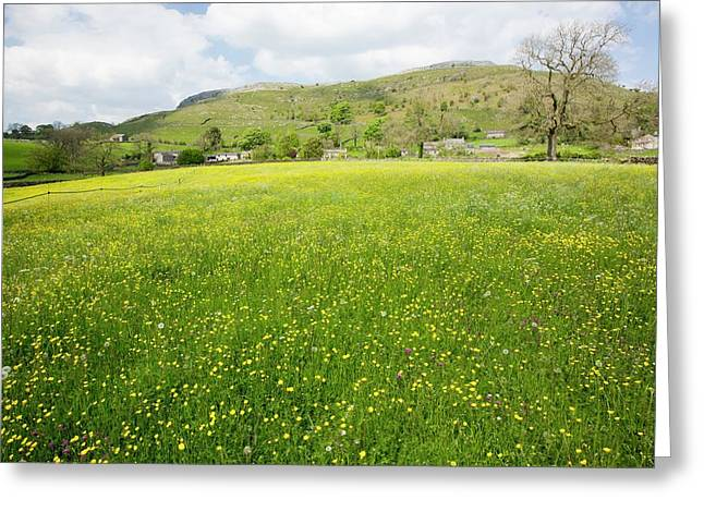 Wild Flower Hay Meadows In Austwick Greeting Card by Ashley Cooper