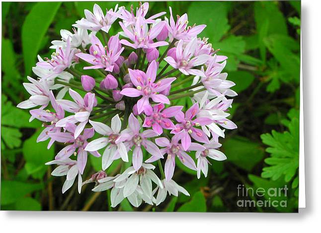 Wild Flower2 Greeting Card by Michael Rushing
