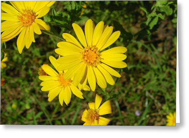 Wild Flower4 Greeting Card by Michael Rushing
