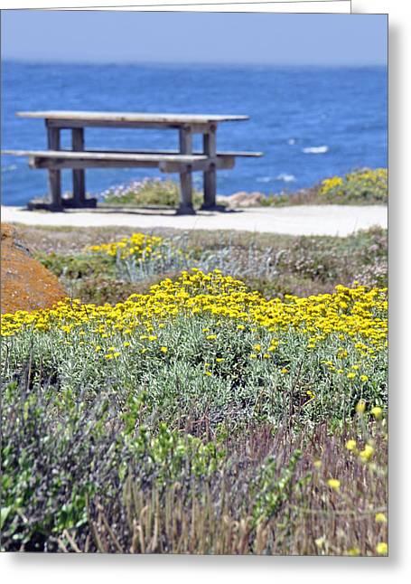 Wild Flowers Along Pacific Coast Highway Greeting Card by Caroline Stella