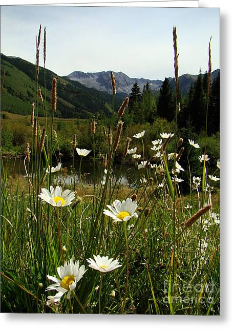 Wild Flowers At Ashcroft Greeting Card