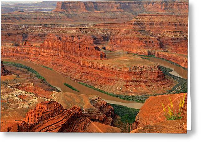 Wild Flowers At Dead Horse Point. Greeting Card