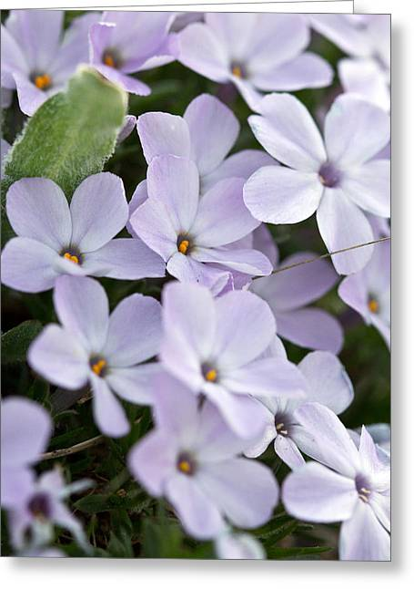 Greeting Card featuring the photograph Wild Flowers by Bob Noble Photography