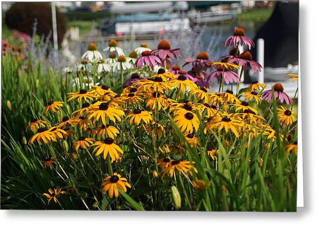 Wild Flowers By The Lake Greeting Card by Thomas Fouch