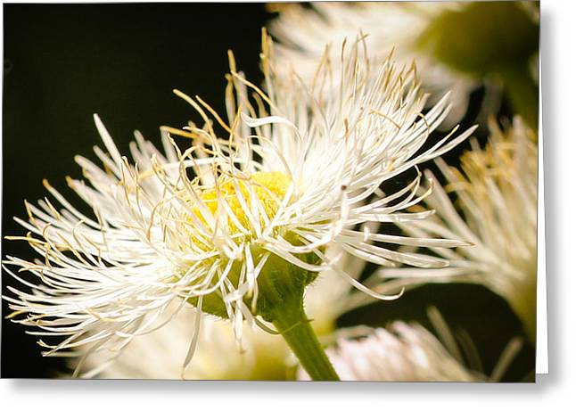 Greeting Card featuring the photograph Wild Flowers by Cathy Donohoue