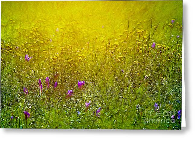 Wild Flowers In Morning Light Greeting Card by Odon Czintos