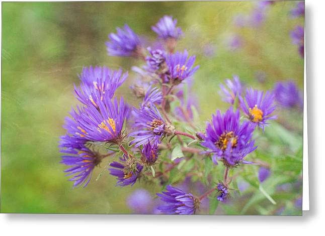 Wild Flowers In The Fall Greeting Card