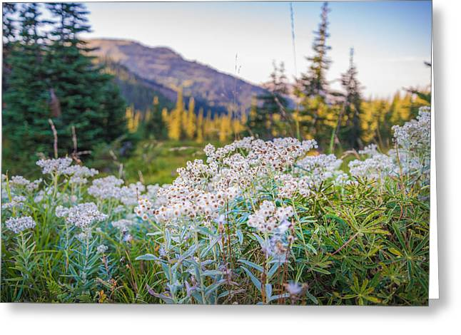 Wild Flowers Greeting Card by Kristopher Schoenleber