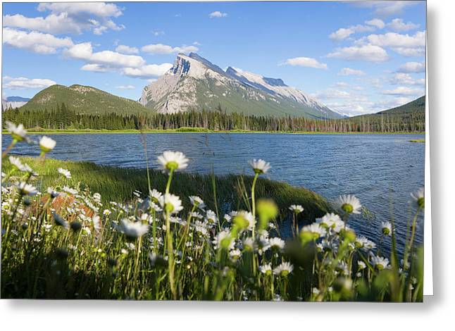 Wild Flowers, Mt Rundle, Vermillion Greeting Card