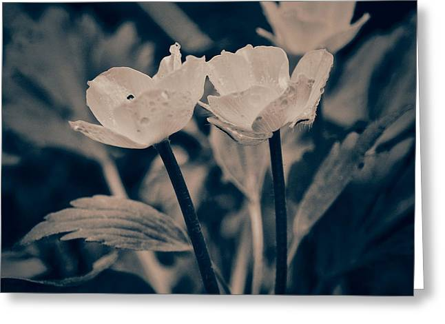 Wild Flowers Greeting Card by Tom Druin