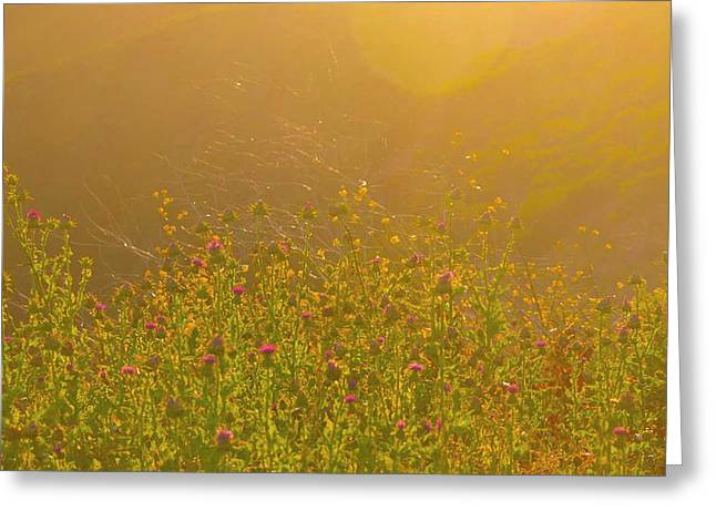 Wild Flowers With Webs Greeting Card by Deprise Brescia