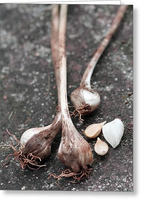 Wild Garlic Greeting Card by Melinda Fawver
