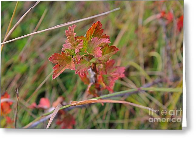 Wild Gooseberry Leaves Greeting Card