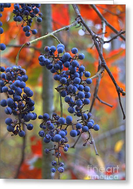 Greeting Card featuring the photograph Wild Grapes by Jim McCain