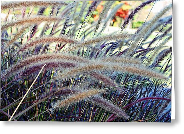 Wild Grasses In Autumn Greeting Card by Ellen Tully