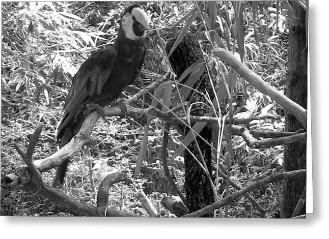 Greeting Card featuring the photograph Wild Hawaiian Parrot Black And White by Joseph Baril