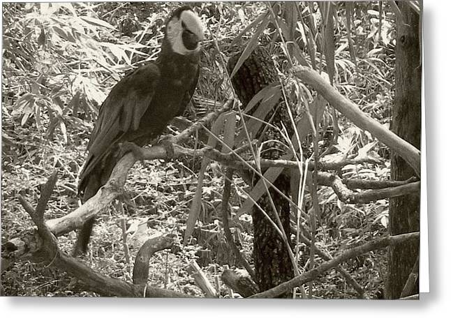 Greeting Card featuring the photograph Wild Hawaiian Parrot Sepia by Joseph Baril