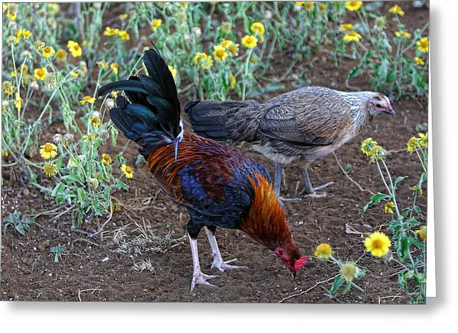 Wild Hen And Rooster Greeting Card by Linda Phelps