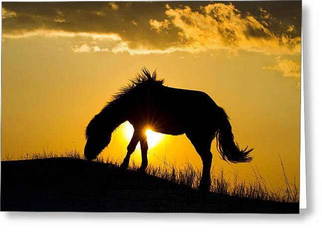Wild Horse And Setting Sun Greeting Card