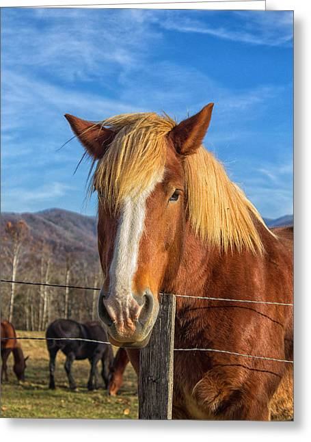 Wild Horse At Cades Cove In The Great Smoky Mountains National Park Greeting Card