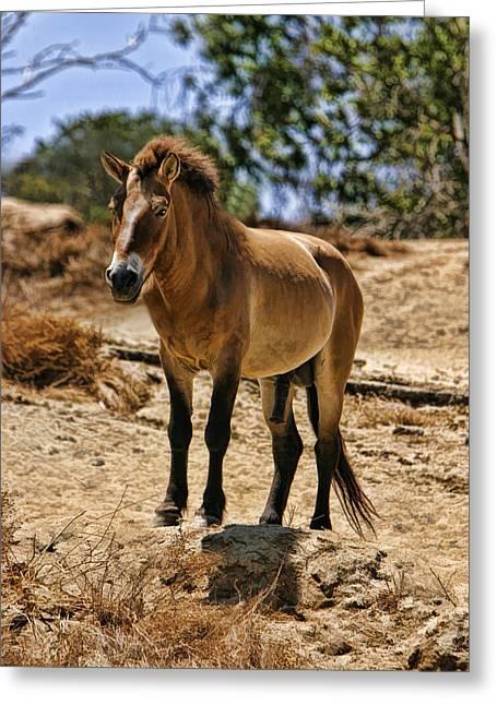 Wild Horse Greeting Card by Blake Richards