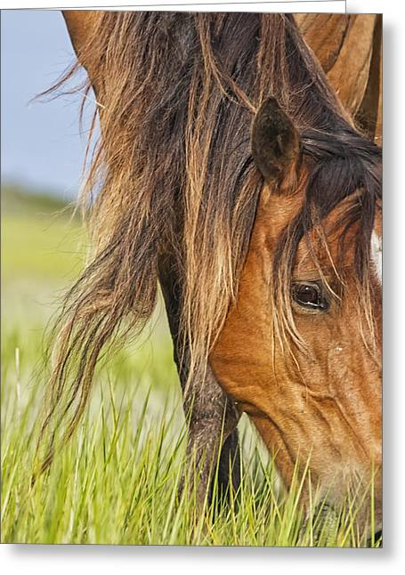 Wild Horse Grazing Greeting Card