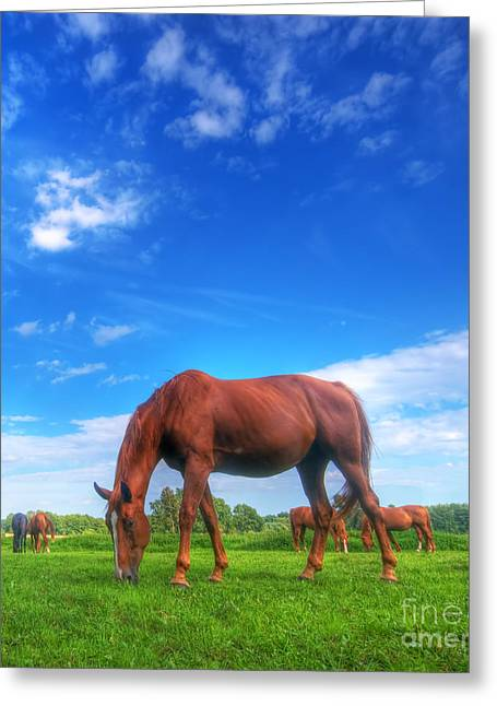 Wild Horse On The Field Greeting Card by Michal Bednarek
