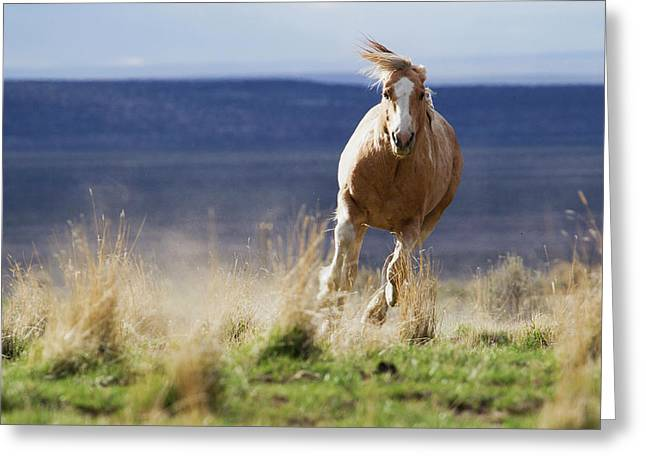 Wild Horse Running Greeting Card