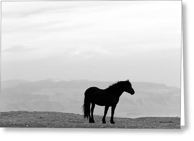 Wild Horse Silhouette Bw Greeting Card by Leland D Howard