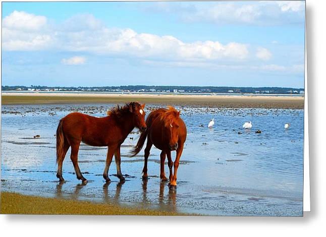 Wild Horses And Ibis 2 Greeting Card by Cindy Croal