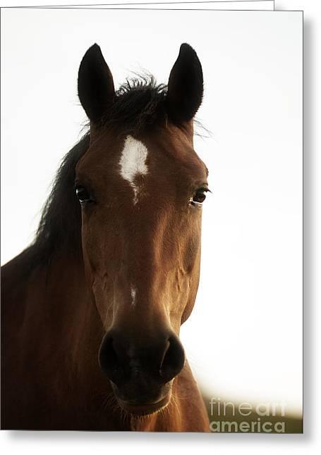 Wild Horses-animals-image-14 Greeting Card