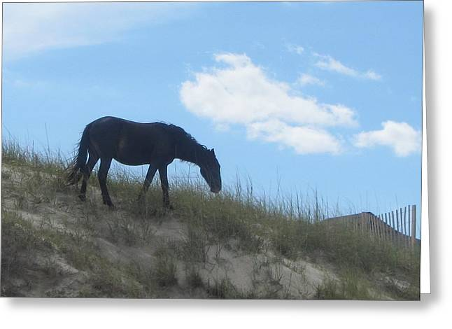 Wild Horses Of Corolla 3 Greeting Card by Cathy Lindsey