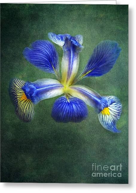 Wild Iris Greeting Card by Kathi Mirto