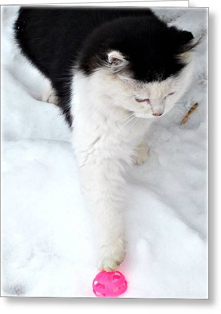 Wild Kitty Fun Greeting Card by Donna Brown