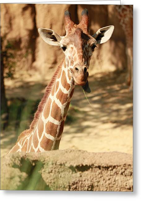 Wild Look Greeting Card by Tinjoe Mbugus