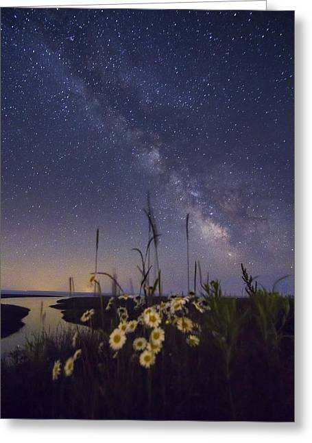 Wild Marguerites Under The Milky Way Greeting Card