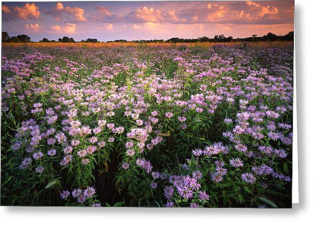 Wild Mints Galore Greeting Card by Ray Mathis