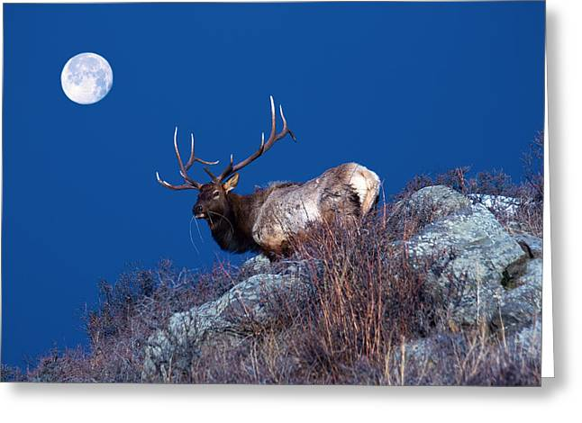 Wild Moon Greeting Card by Shane Bechler