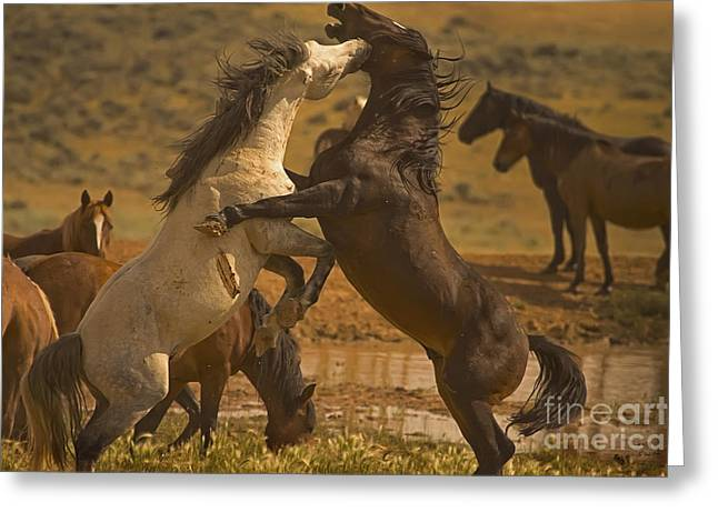 Wild Mustang Stallions - Signed Greeting Card