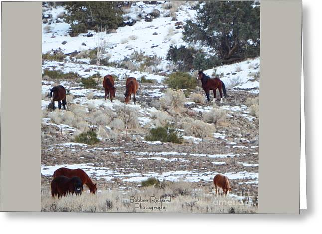 Wild Mustangs In A Nevada Winter Greeting Card by Bobbee Rickard