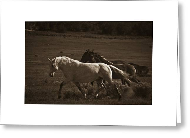 Greeting Card featuring the photograph Wild Mustangs Of New Mexico 10 by Catherine Sobredo