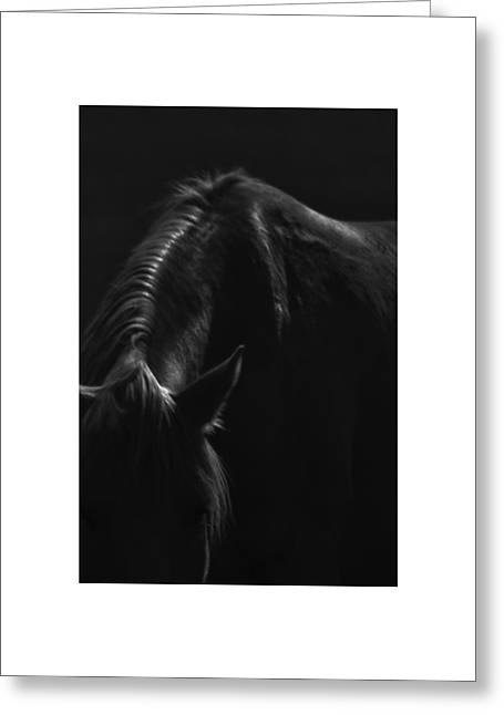 Greeting Card featuring the photograph Wild Mustangs Of New Mexico 14 by Catherine Sobredo