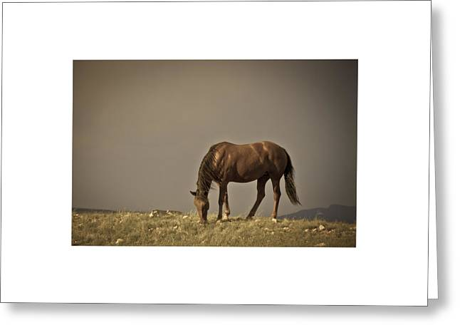Wild Mustangs Of New Mexico 20 Greeting Card