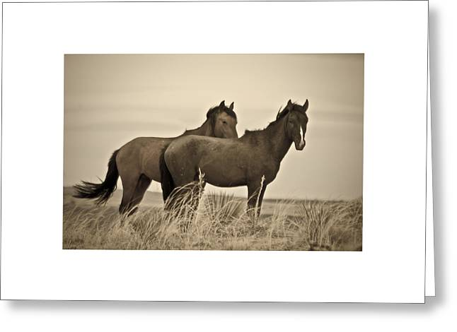Greeting Card featuring the photograph Wild Mustangs Of New Mexico 3 by Catherine Sobredo