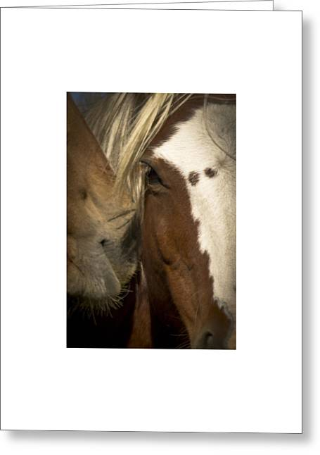 Wild Mustangs Of New Mexico 32 Greeting Card