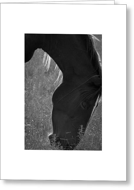 Wild Mustangs Of New Mexico 33 Greeting Card